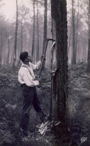 Harzgewinnung, Pechler, Harzer, Waldarbeiter