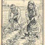 Tabakpflanze, Tabakanbau, Tabakbauern, Tabakfeld