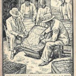 Tabakballen, Tabakernte, Tabakbauern
