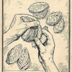 Tabakblätter, Tabakernte