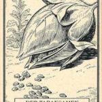 Tabaksamen, Tabakpflanze, Tabakanbau
