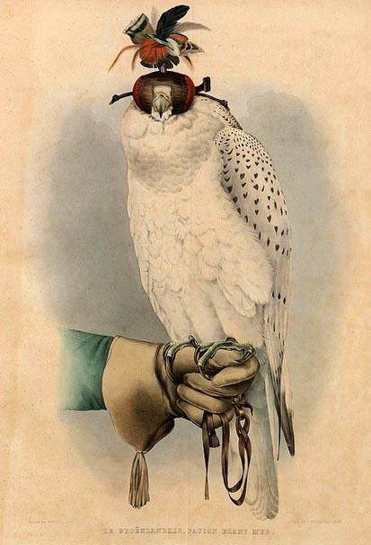 Vogel sind auf lederbehandschuhter Hand