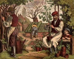 farbige Illustration: Gärtner bearbeiten Bäumchen und decken Gewächshaus ab
