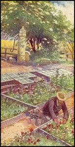 Sammelbild: Gärtner am Freiluftbeet