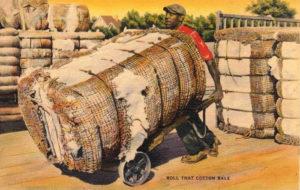 Baumwollernte, Baumwolle, USA