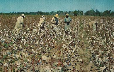Der Baumwollarbeiter