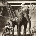 Tierärzte, OP, Elefant