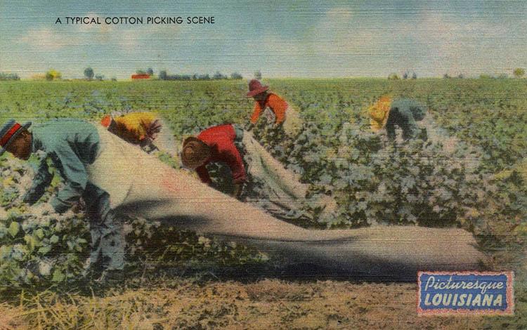 Baumwolle, Baumwollernte, USA