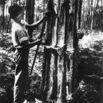 Harzgewinnung, Waldarbeiter, Pechler