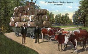 Baumwolle, Transport, Ochsenkarren