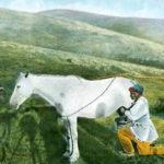 Stute, Pferd, melken, Stutenmilch, Russland