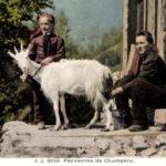 Ziege, Ziegenmilch, Schweiz, melken