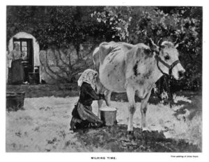 Melkerin, melken, Kuh, Milchkuh, milking