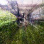 Auge, blur, unscharf, Zoom