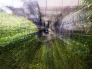 Farbfoto: weggezoomtes Auge