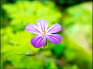Blümchen, Blume, Blüte, Botanik, Botaniker