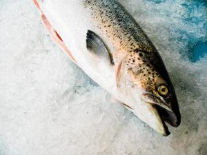 Farbfoto: toter Speisefisch auf Eis