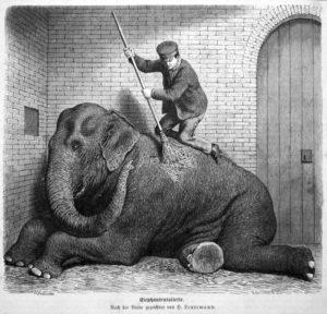 Tierpfleger, Tierwärter, Zoowärter, Elefant, Tierpflege