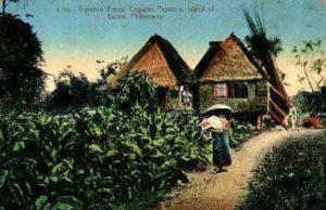 Tabakfeld, Tabakanbau, Tabakbauern, Asien