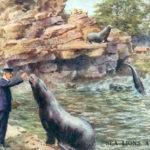 Tierpfleger, Tierwärter, Zoowärter, Seelöwen