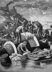 Walfänger, Wale, Walfang