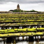 Austernbänke, Austernzucht, Austernbank, Normandie, Austern