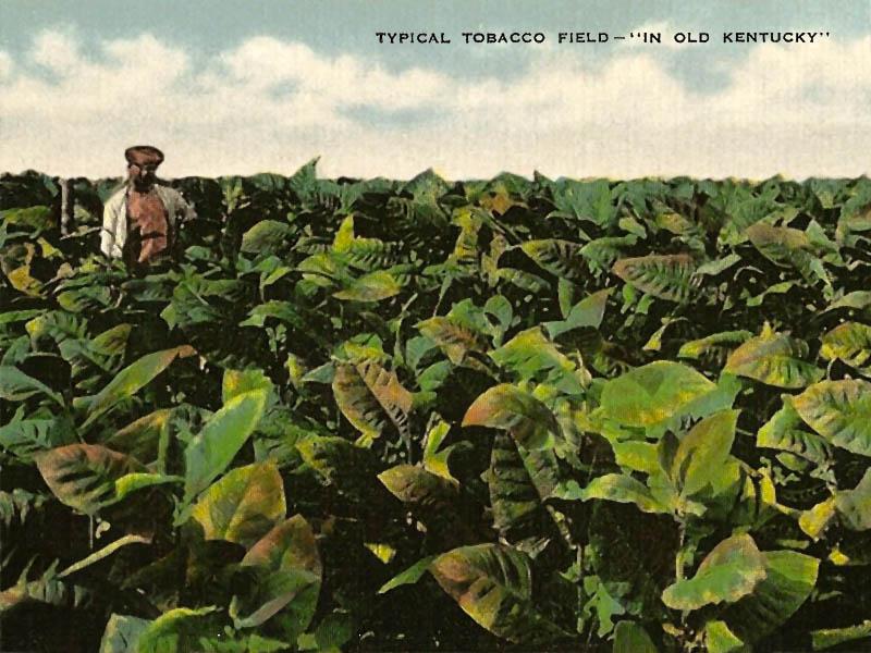 Der Tabakbauer