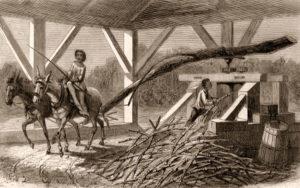 Zuckerhesteller, Zuckerrohr, Zuckerrohrmühle, Landwirtschaft, Louisiana