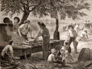Zuckerhersteller, Zuckerrohr, Zuckersiederei, Texas