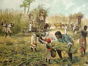 Farblitho: Erntegeschehen auf einer Zuckerrohrplantage, mehrere schwarze Sklaven schneiden. bündeln und verladen Zuckerrohr auf Ochsenkarren, zwei Aufseher etwas weiter hinten behalten das Geschehen im Auge