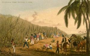 Zuckerrohrente, Landwirtschaft, Brasilien