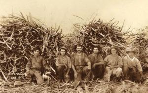 s/w Foto: sechs Arbeiter hockend vor Zuckerrohrstapeln in Fotografierpose