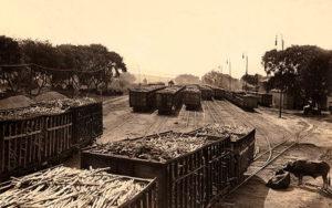 s/w Foto: viele Zuckerrohwagons auf den Gleisen eines Umschlagplatz