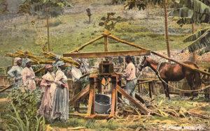 koloriertes Foto: dunkelhäutige Arbeiterinnen bringen Zuckerrohr auf ihrem Kopf tragend zur Presse, Landwirtschaft, Jamaika,
