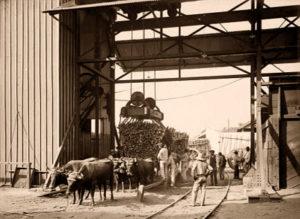 Zuckerhersteller, Zuckerrohrverarbeitung, Landwirtschaft, Cuba