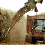 Zuckerhersteller, Zuckerrohr, Erntemaschine,Landwirtschaft, Brasilien
