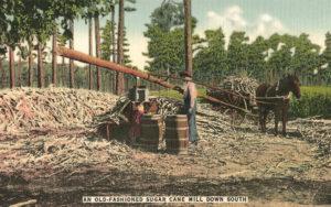 koloriertes Foto: Mann schiebt Zuckerrohr in in die Quetsche, während ein Pferd mittels langem Baumstamm im Kreis gehend das Mahlwerk bewegt