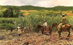 altes Farbfoto: zwei Aufseher zu Pferd überwachen die Ernte auf einer Zuckerrohrplantage
