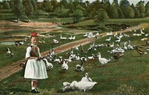 koloriertes Foto: Mädchen in Hessischer Tracht hütet viele Gänse auf einer Wiese vor einem Waldrand