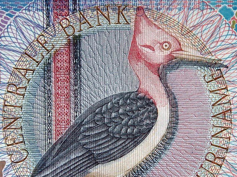 Ausschnitt Geldschein mit Vogelabbild