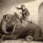 Tierpfleger, Elefantenwärter, Elefant