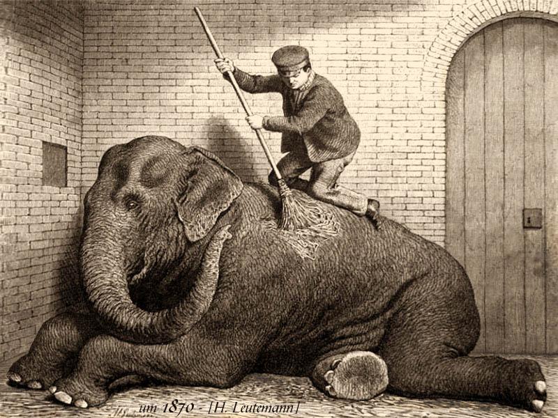 Der Tierpfleger