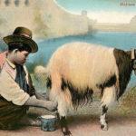 Malta, Milchverkäufer, melken, Ziege, Ziegenmilch