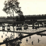 Reisanbau, Reisbauern, Japan, Reisfeld