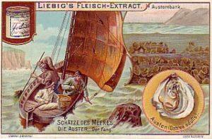 Sammelbild, Austernfischer, Austernbank, Austern