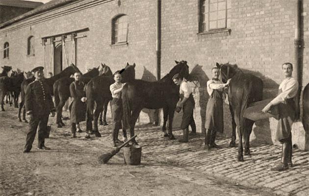 sw Fotopostkarte: mehrere Pferde werden vorm Stall von Soldaten gestriegelt - 1908