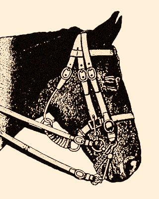 Zeichnung: Pferdekopf mit Kandarenzäumung
