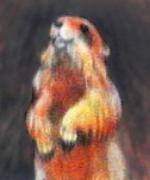 Farblitho: aufgerichtetes Murmeltier