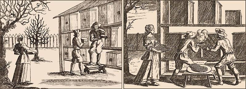 Holzstich: zwei Männer und eine Frau holen Honigwaben aus Bienenbeuten