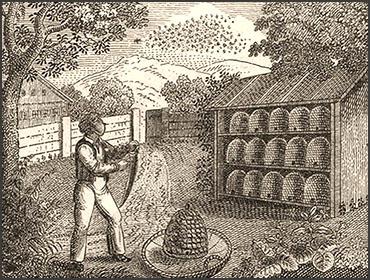 Holzschnitt: Imker vor Bienenhaus mit Körben